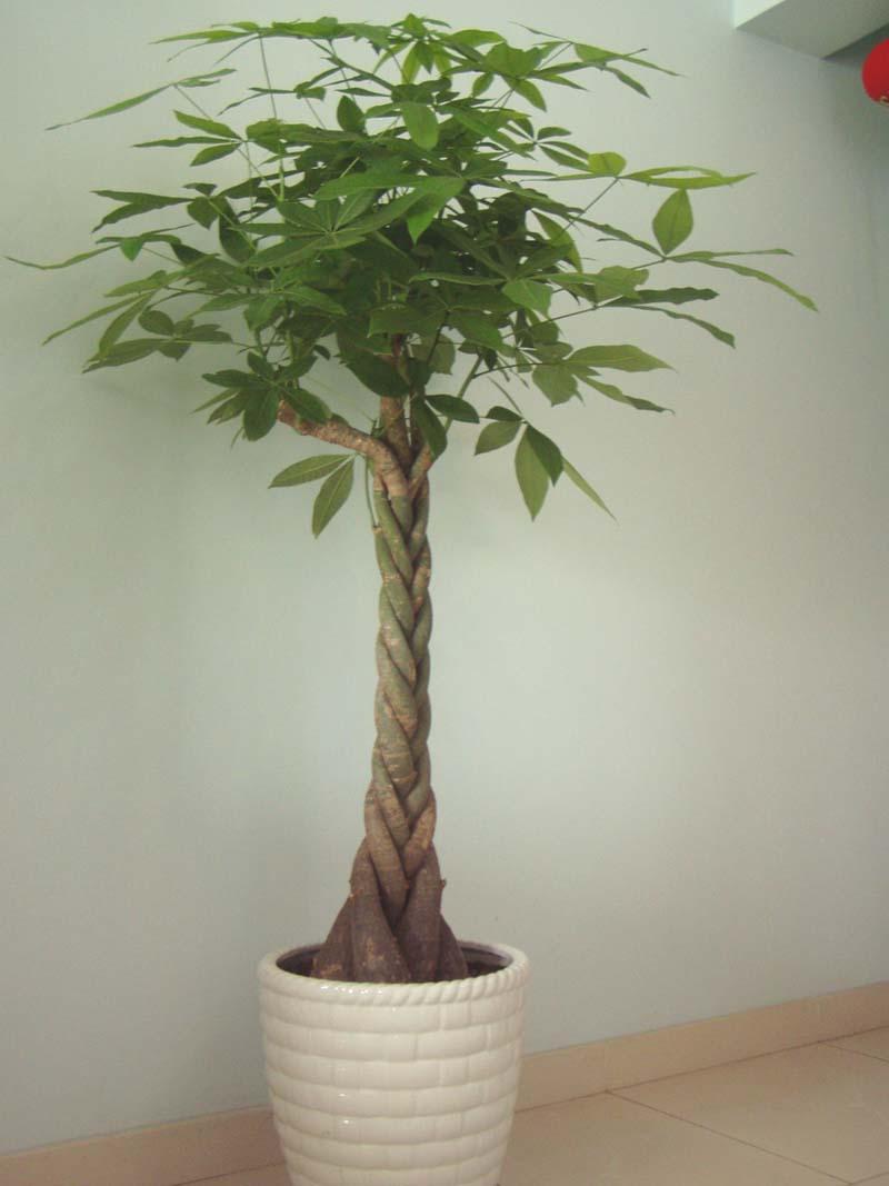 办公室植物租摆-专业植物租赁|最新室内绿植租赁方案和报价