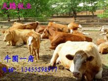 供应良种动物种苗,欢迎养殖户前来考察参观