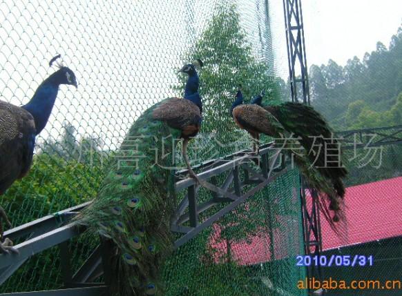 广州喜迎珍禽养殖公司