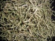 大量河南封丘金银花植物原药材图片