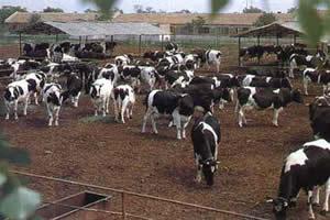 五台县西龙泉畜牧发展有限公司