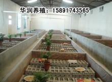 供应特种经济动物养殖致富蝎子养殖环境