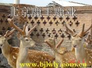 养鹿视频图片