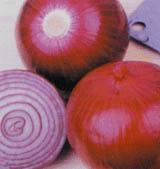 供应中国红洋葱种子公司蔬菜种子公司批发