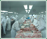 供应牛肉羊肉驴肉