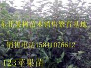 123苹果苗价格图片
