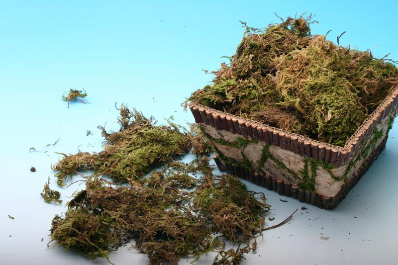 供应苔藓兰花专用栽培质基、兰花专用苔藓、干青苔、水苔、批发