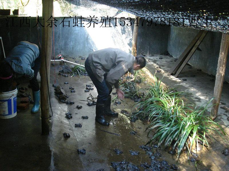 石蛙厂环境图片
