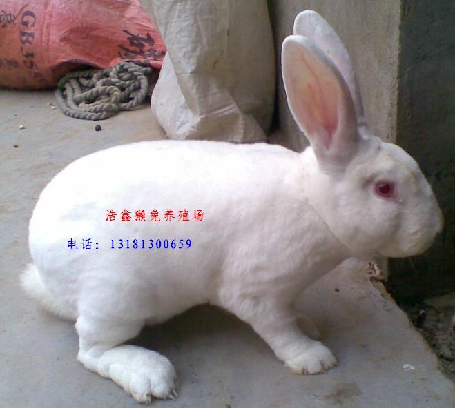 供应水泥兔笼兔笼的制作