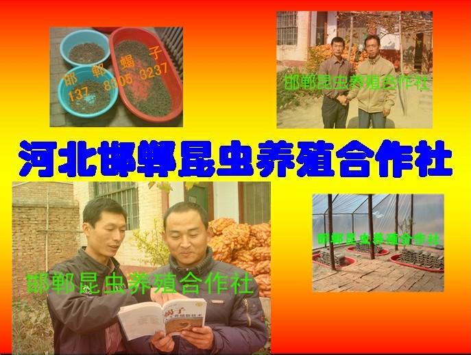 河北邯郸昆虫养殖合作社