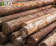 10米竹竿图片