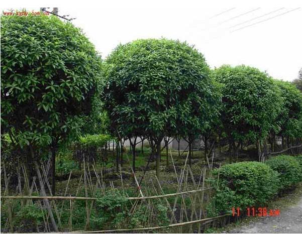 园林树木有限公司图片