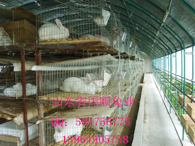 供应铁兔笼价格