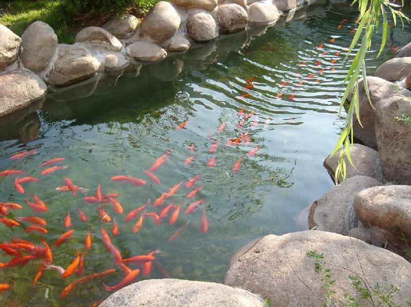 景观水,观赏鱼池水处理设备-景观水处理设计方案,设备厂家