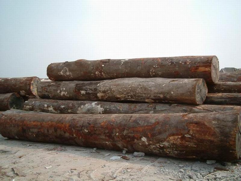 广东木材市场最新原木行情走势分析