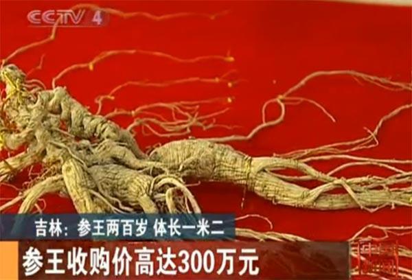 山参参王300万元