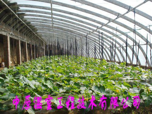 无支柱大棚骨架机 钢管镀塑蔬菜大棚 中原温室工程 -一呼百应资讯频道