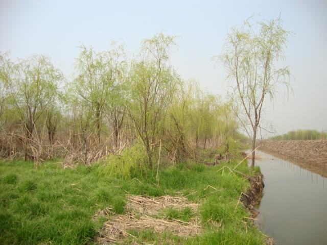 ...乔木高达18m胸径1m树冠倒广卵形.分布长江流域及其以南...