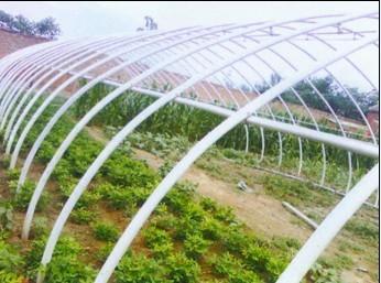 5,用途广,该温室大棚骨架可广泛适用于各种蔬菜,育苗,果树,水产